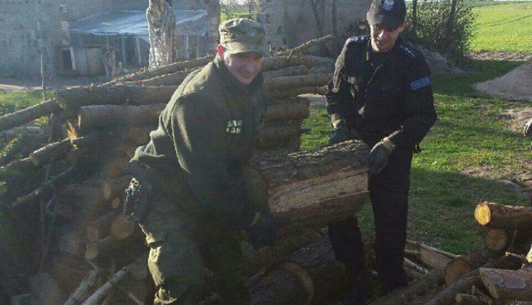Za kradzież drzewa odpowie przed sądem