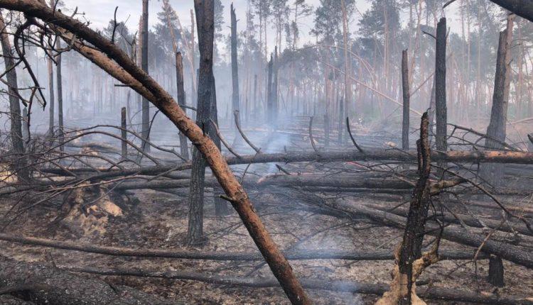 """Nadleśnictwo Szubin: """"Ktoś podpala las"""""""