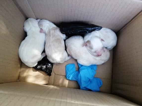 Wyrzuciła szczeniaki do śmietnika. Zwierzęta uratowali sąsiedzi