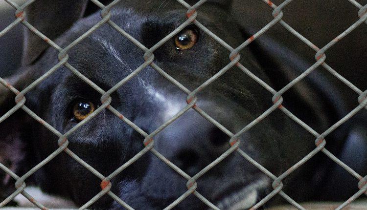 Trwa zbiórka karmy dla psów ze schronisk na Pałukach