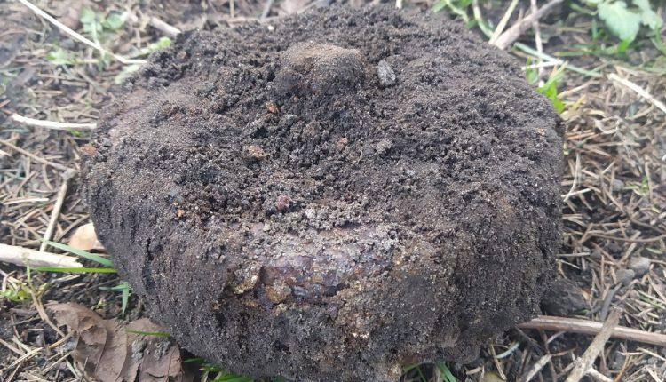 Podczas prac w ogrodzie wykopał minę z czasów II wojny światowej