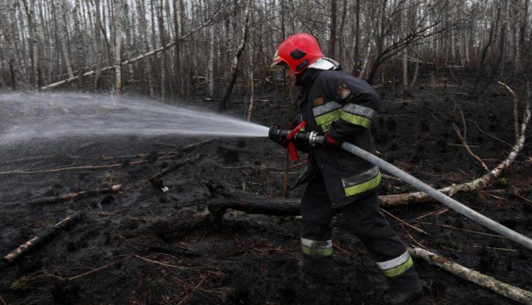 Dyrektor Biebrzańskiego PN rok po pożarze parku: przyroda ucierpiała mniej niż przypuszczano