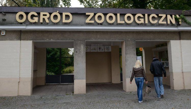 Poznań: od poniedziałku ogród zoologiczny ponownie otwarty