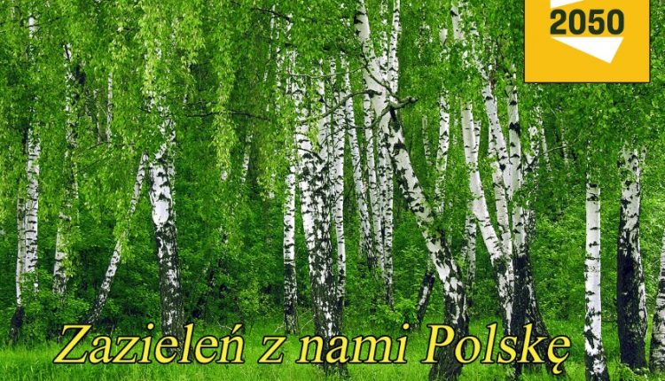 Ruch Szymona Hołowni będzie rozdawał sadzonki drzew w Żninie, Barcinie i Łabiszynie
